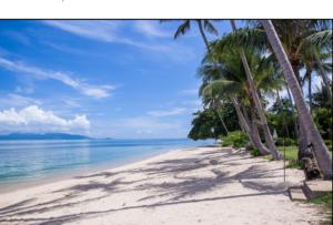 Coconut Grove D2b